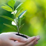 Çevre Koruma ve Kontrol Bölümü 2019 2018 Taban Puanları ve Başarı Sıralaması