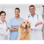 Veteriner Fakültesi Başarı Sıralamaları ve Taban Puanları